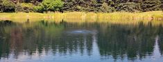 Although it can't always be seen, pond muck, sludge and organic matter that builds up on the bottom of large ponds is usually the cause of many of the other problems that occur in ponds. Keep reading for effective ways to reduce pond muck Pond Aerator, Pond Maintenance, Pond Liner, Diy Pond, Water Gardens, Ponds Backyard, Real Plants, Deep Water, Water Features