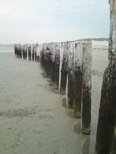 Old groynes at West Wittering. My photo