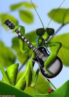Guitar grasshopper  Lol