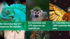Petition · servicioalciudadano@minambiente.gov.co: Biodiversidad en riesgo NO AL FRACKING EN COLOMBIA. · Change.org Fauna, Change, Bird, Animals, Sustainable Development, Environment, Birds, Activities, Animales