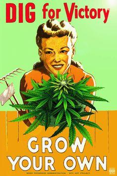 Grow your own marijuana weed memes