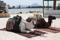Tunis (2010)