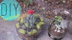 DIY Indoor Garden - Cactus Terrarium {How to} by ANNEORSHINE | 1004