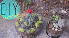 DIY Indoor Garden - Cactus Terrarium {How to} by ANNEORSHINE | 1004 Terrarium Diy, How To Make Terrariums, Indoor Cactus Garden, Indoor Plants, Indoor Gardening, Cactus Plants, Garden Spells, Cactus Pictures, Diy Plant Stand