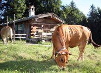 Das Freilichtmuseum Glentleiten ist das größte Freilichtmuseum Südbayerns. Es ermöglicht einen umfassenden Einblick in den ländlichen Alltag der Menschen Oberbayerns, in ihre Baukultur und Arbeitswelt.     Mehr als 60 original erhaltene, translozierte Gebäude sind samt ihrer Einrichtung inmitten einer nach historischen Vorbildern gepflegten Kulturlandschaft wieder aufgebaut.     Auf dem weitläufigen, abwechslungsreichen Gelände finden Sie Gärten, Wälder und Weiden mit alten Tierrassen.