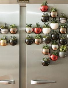 Classic Mini Magnet Succulent Garden, Set of 3