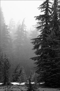 This photograph was taken on a foothill that faces Mount Bachelor in Bend Oregon on a very cold, rainy day.