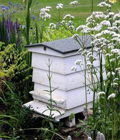Bees like white, yellow and blue flowers #backyardbeekeeper #beekeepingideas