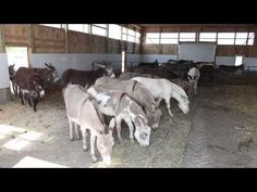 Since 1992, The Donkey Sanctuary of Canada has been a refuge for donkeys, mules and hinnies who have been neglected or abused, or who can no longer be cared for by their owners.