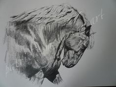 Suffork Punch Stallion.  pencil on paper.   View on website for orders on prints.  #patriciamccarthyart.com.  #horse.  #horsedrawings.