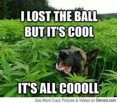 funny dog memes husky - Google Search