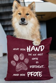 Living With Cats, Banksy Graffiti, Bearded Collie, You Had One Job, Facebook Humor, Beagle, Beautiful Creatures, Animals And Pets, Hand Lettering