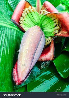 http://www.shutterstock.com/pic-222389896/stock-photo-banana-blossom-in-the-garden-banana-flower.html?src=z1Js5wcK9…