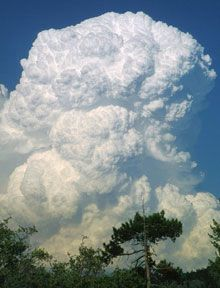 Towering cauliflower-like cumulus clouds resulting from warm, moist air rising rapidly through a cooler layer