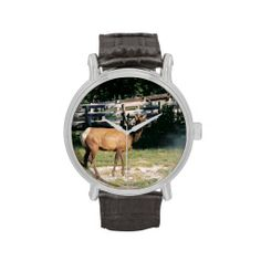 Female Elk in Yellowstone Wristwatch