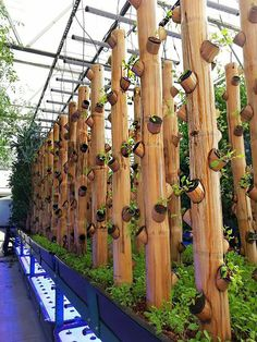 Greenhouse Farming, Hydroponic Farming, Hydroponic Growing, Aquaponics Plants, Backyard Aquaponics, Greenhouse Ideas, Vertical Farming, Vertical Gardens, Aquaponics System