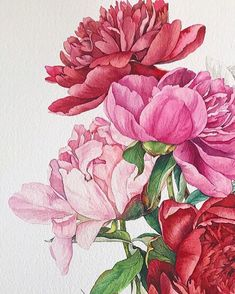 Watercolor Projects, Watercolor Cards, Watercolor Flowers, Watercolor Paintings, Botanical Flowers, Botanical Art, Peony Illustration, Cherry Blossom Art, Polychromos