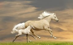Horses - green, baby, horse, white, mother, animal