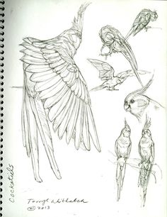 Little Theropods All Around Us -By Terryl Whitlatch – Cockatiel Bird Drawings, Animal Drawings, Drawing Birds, Animal Sketches, Drawing Sketches, Sketching, Terryl Whitlatch, Tatoo Bird, Bird Sketch