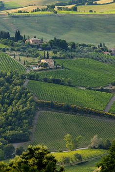 ✮ Home to the famous Brunello di Montelcino wines, the rolling hills surrounding Montelcino, Tuscany Italy