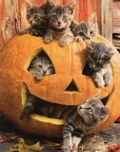 Cute Kittens, Cats And Kittens, Catsuit, Color Splash, Cat Playground, Cat Pumpkin, Cat Birthday, Birthday Ideas, Cat Pattern
