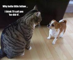 """I'll call you """"he-did-it"""" - http://funnypicturequotes.com/ill-call-you-he-did-it/"""