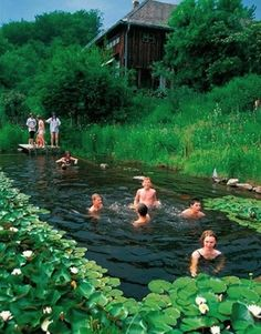 17 Natural Swimming Pools You Wish Were In Your Backyard Natural swimming pools use plants to filter the water instead of chemicals and look gorgeous while doing it.