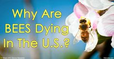 Over the 2015 to 2016 winter, more than 28 percent of the bee colonies were lost—an increase of nearly 6 percent compared to the previous winter. http://articles.mercola.com/sites/articles/archive/2016/05/24/us-bee-colony-losses.aspx