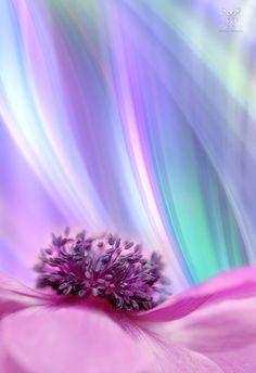 ~~Anemone macro by Jasna Matz~~