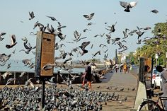 The pigeon cluster on the Gateway of India in Bombay is a recent addition. Discover India, Hassle Free with www.ziptrips.in