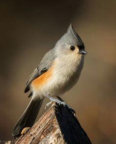 Birds In The Sky, Walk In The Woods, Circle Of Life, Bird Watching, Bird Art, Bird Feathers, Beautiful Birds, Bird Houses, Cute Animals