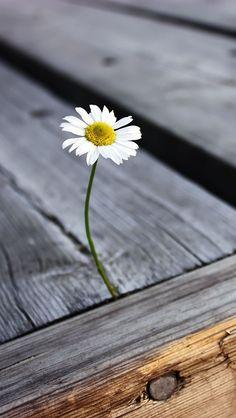 ~where flowers grow.. so does HOPE~