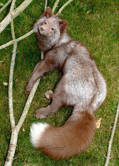 Pastel Fox Soft Mount 1 by *LilMissDoeEyes on deviantART