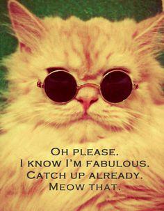 Cool Cat #quotes