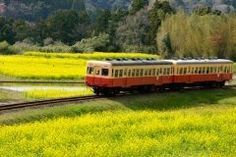 菜の花と里山を走る小さな列車小湊鐵道こみなとてつどうは市原市を走るローカル線です 春には一面黄色の花畑の中を走ります この風景を見たいということで毎年3月中ごろから観光にいらっしゃる方が多いんですよ()v 昔ながらののどかな風景は楽しいですし子ども達もおはしゃぎです そろそろ春がやってきそうな気候になってきましたね ぜひ菜の花畑とかわいい列車をご覧になってみてはいかがでしょうか  小湊鐵道株式会社 鐵道部のFacebookページはこちら http://ift.tt/2hYtT5e  #列車#子連れ#葉の花#春#鉄道 tags[千葉県]