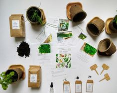 Eco-friendly container gardening kits. by HortikiPlants on Etsy Herb Garden Kit, Herb Garden In Kitchen, Kitchen Herbs, Kids Gardening Kit, Container Gardening, Herb Gardening, Pet Grass, Science Kits For Kids, Plant Markers