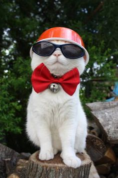 One very cool kitty.....