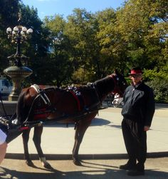 Picture taken from horse drawn carriage ride through Central Park NYC Central Park Nyc, New York Pictures, Horse Drawn, Short Trip, Riding Helmets, Horses, Horse