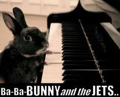 hahahaha Bunny and the Jets Elton Bun