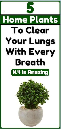 5 Plants to Clear Your Lungs With Every Breath Healthy Lifestyle Tips, Healthy Tips, Stay Healthy, Healthy Quotes, Healthy Heart, Keeping Healthy, Healthy Women, Healthy Food, Healthy Recipes