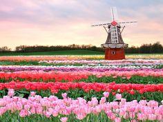 Atrações da cidade de Lisse na Holanda