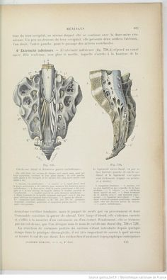 From a large tome full of medical drawings. Book also includes hearts and brains in time for Halloween. This one could easily be inspiration for an H. R. Giger like drawing or sculpture.  From 'Traité d'anatomie humaine. Tome 2,Fascicule 1 / par L. Testut,...'   1899-1901