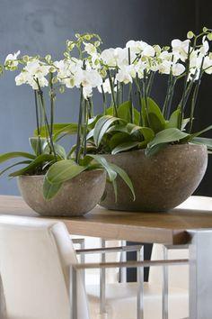 ❤ witte orchideeën!