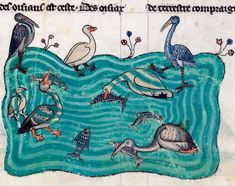 FB Discarding Images water birds  Frederick II, De arte venandi cum avibus (French translation), France ca. 1310 (BnF, Français 12400, fol. 6r)