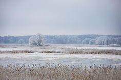 """NEU IM BLOG: Eisiger Tanz der """"Brieger Gänse"""" . Die Ufer der Oder sind in dickes Eis gepackt und der Teil des Flusses, der nicht zugefroren ist, trägt große Schollen. Die gleiten überraschend schnell auf dem Strom dahin und zischen leise wie Gänse, wenn sie einander berühren. Diesem Klang und ihrer vermuteten Herkunft verdanken sie ihrem Namen. Der Volksmund kennt zwar viele Geschichten um dieses Naturphänomen, weiß aber auch nichts genaues. Stoisch nennt er sie seit jeher """"Brieger… Bacharach, Snow, Outdoor, Deep Winter, Hiking Trails, Ruins, Outdoors, Outdoor Games, The Great Outdoors"""