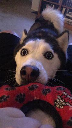 Hey Dad let's play! http://ift.tt/2hRULAQ