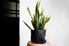 Uashmama's Paper Bags via Bibelot & Token // Le Collectif & Giftagram Paper Bags, Cactus Plants, News, Inspiration, Brown Bags, Biblical Inspiration, Cactus, Paper Envelopes, Inhalation