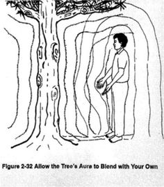 1. Stand approximately two to three feet in front of a tree with your arms at your side. Feel the tree's aura. (Figure 2-32) If you do not feel it, you can move in closer.