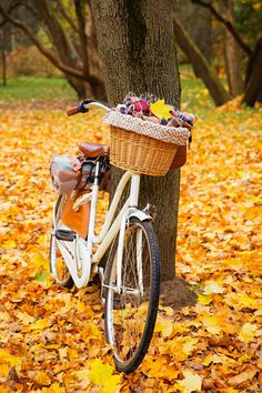 October Fall Activities to Enjoy Now - Town & Country Living