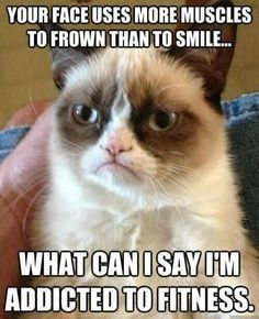 Grumpy cat loves to be fit! Follow this board (Health ; Fitness Humor) for more! #funny